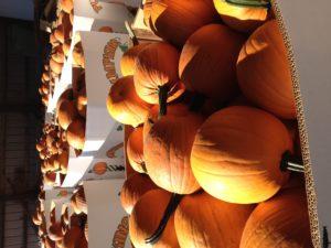 Pumpkin Bins